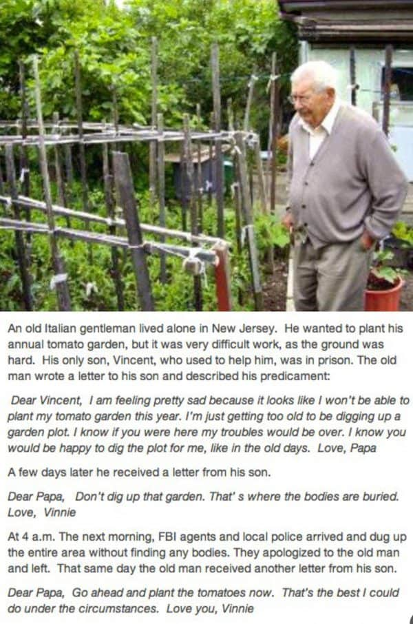 Story about growing tomatoes