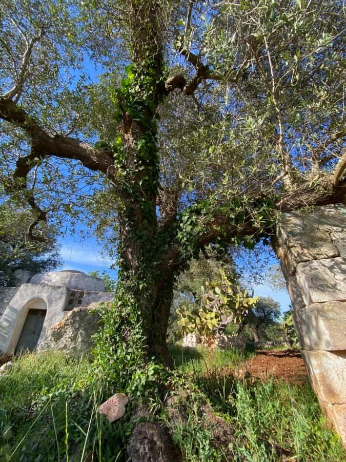 Carolien - Adopt an olive tree