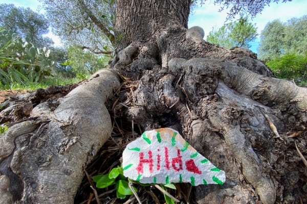 Hilda - Adopt an olive tree