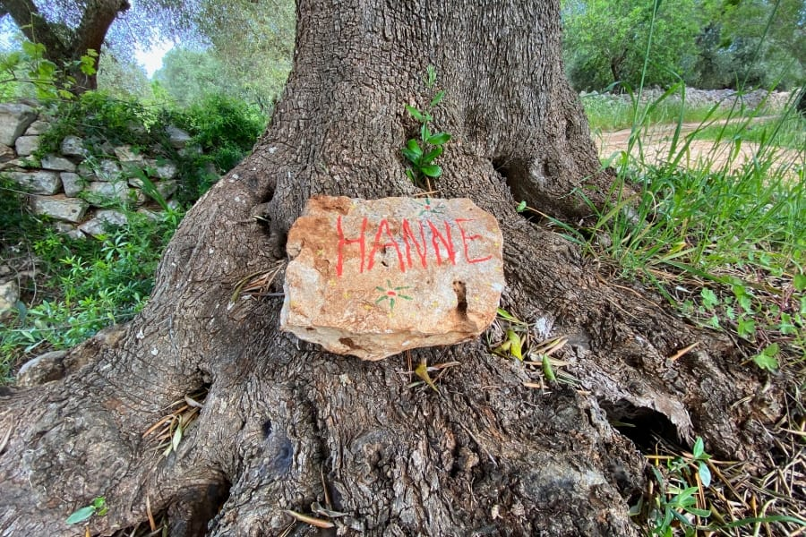 HANNE - Adopt an olive tree