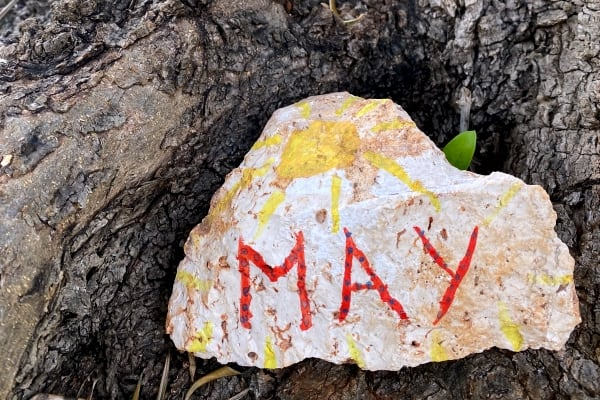 May - Adopt an olive tree
